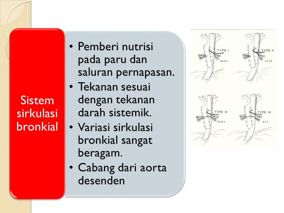 Sistem sirkulasi bronkial