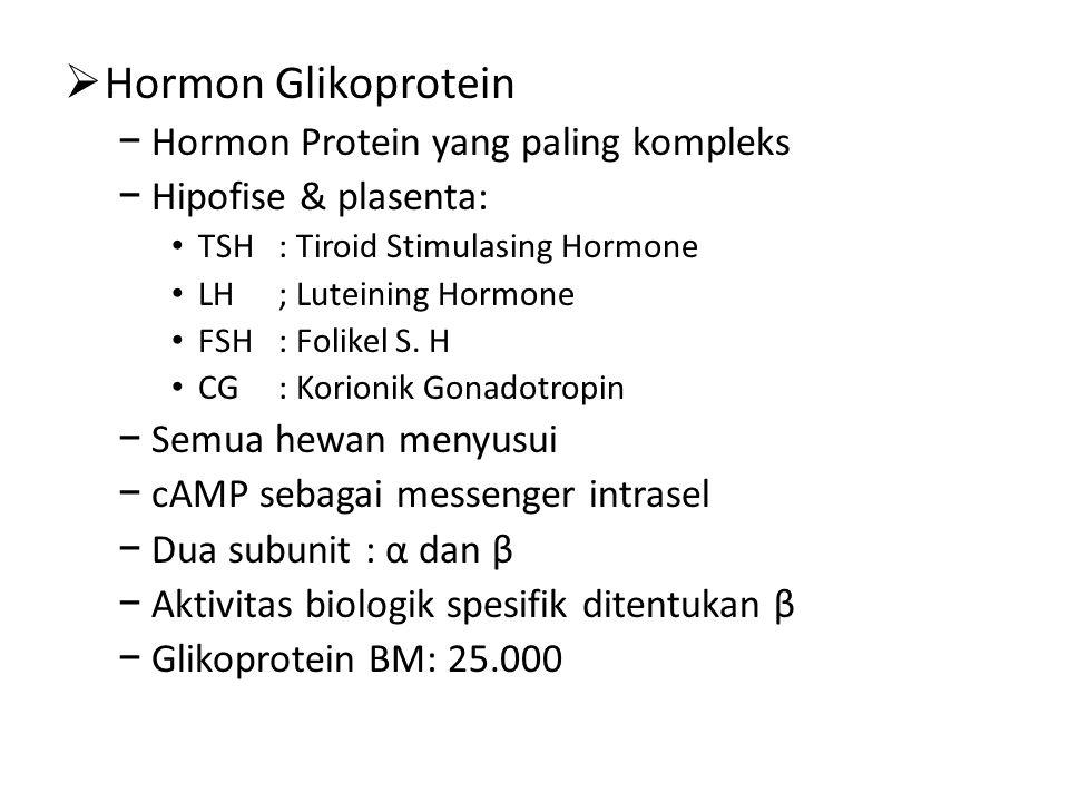 Hormon Glikoprotein Hormon Protein yang paling kompleks
