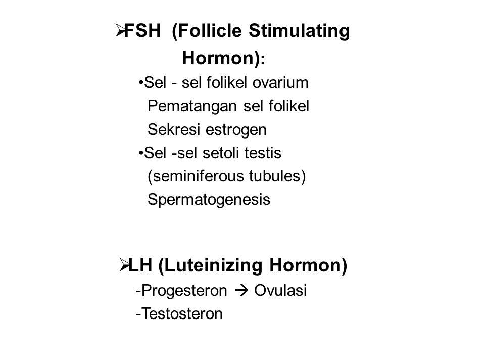 FSH (Follicle Stimulating Hormon):