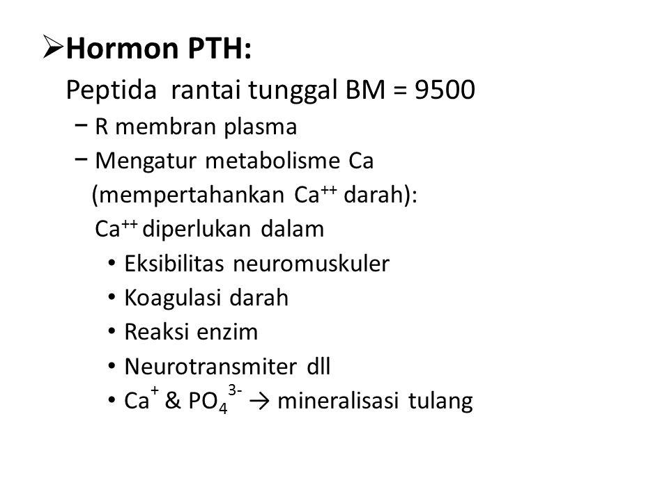 Hormon PTH: Peptida rantai tunggal BM = 9500 R membran plasma