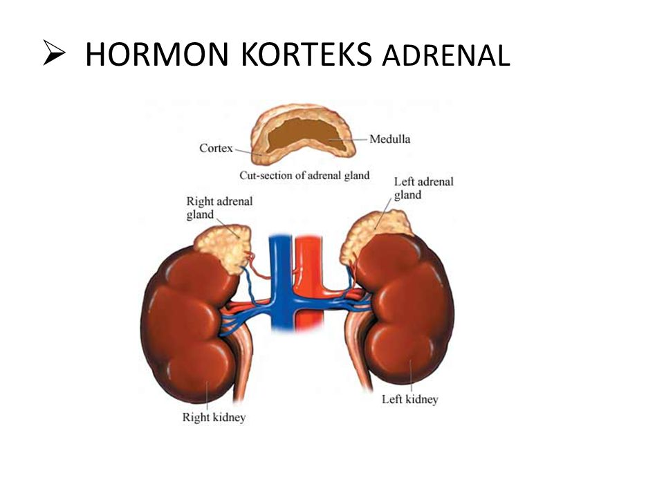 HORMON KORTEKS ADRENAL