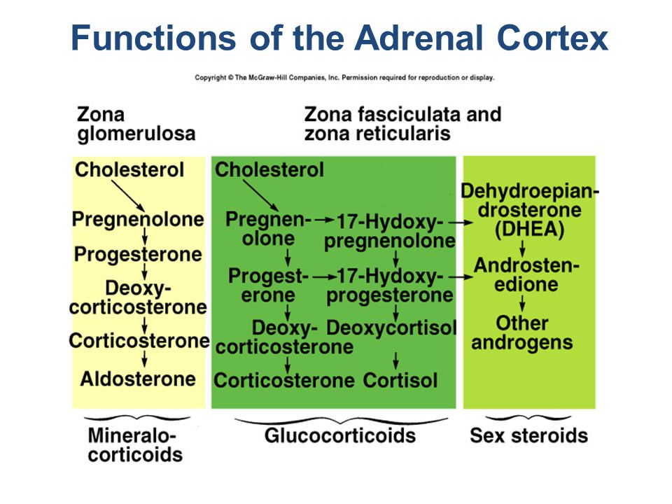 Functions of the Adrenal Cortex