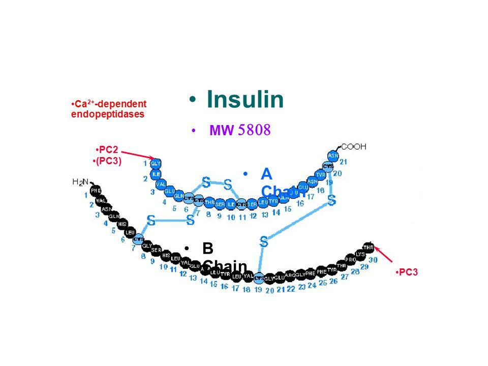 Insulin Proinsulin C peptide A Chain B Chain MW 5808
