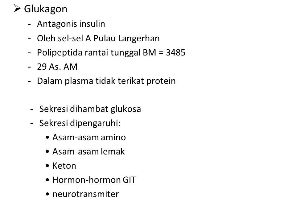 Glukagon Antagonis insulin Oleh sel-sel A Pulau Langerhan