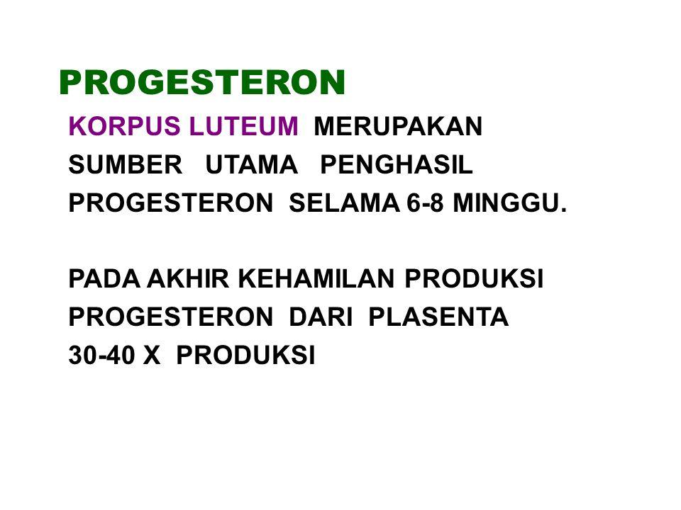 PROGESTERON SUMBER UTAMA PENGHASIL PROGESTERON SELAMA 6-8 MINGGU.