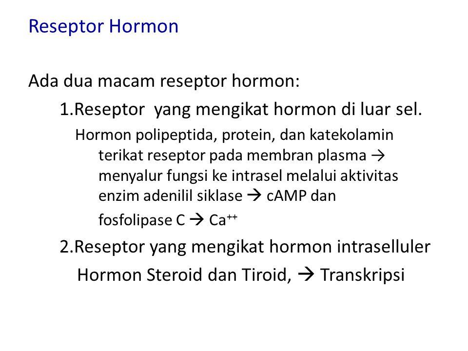 Reseptor Hormon Ada dua macam reseptor hormon: