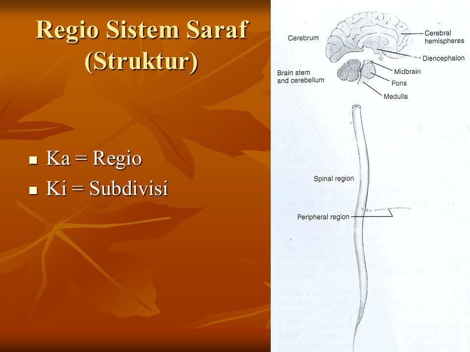 Regio Sistem Saraf (Struktur)
