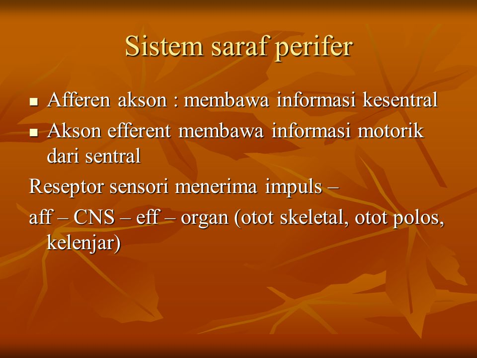 Sistem saraf perifer Afferen akson : membawa informasi kesentral