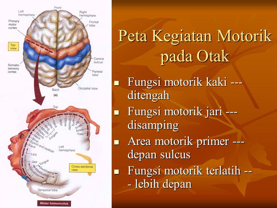Peta Kegiatan Motorik pada Otak