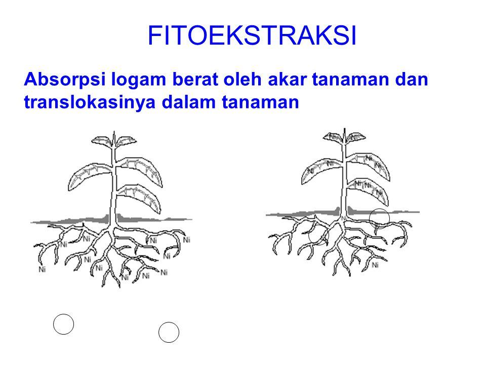 FITOEKSTRAKSI Absorpsi logam berat oleh akar tanaman dan translokasinya dalam tanaman