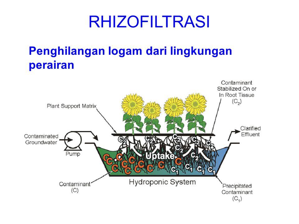 RHIZOFILTRASI Penghilangan logam dari lingkungan perairan