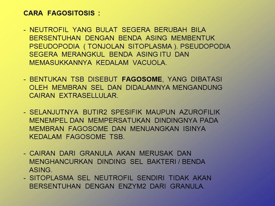 CARA FAGOSITOSIS : - NEUTROFIL YANG BULAT SEGERA BERUBAH BILA BERSENTUHAN DENGAN BENDA ASING MEMBENTUK PSEUDOPODIA ( TONJOLAN SITOPLASMA ).