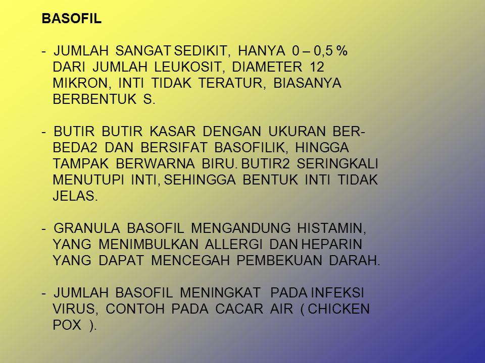 BASOFIL - JUMLAH SANGAT SEDIKIT, HANYA 0 – 0,5 % DARI JUMLAH LEUKOSIT, DIAMETER 12 MIKRON, INTI TIDAK TERATUR, BIASANYA BERBENTUK S.