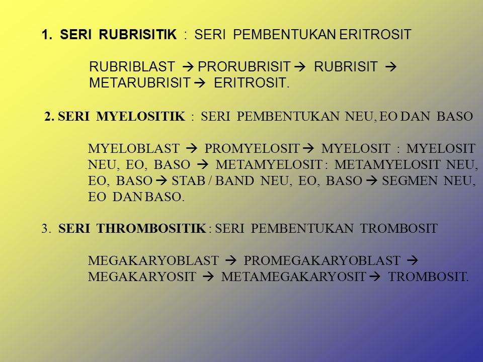 1. SERI RUBRISITIK : SERI PEMBENTUKAN ERITROSIT RUBRIBLAST  PRORUBRISIT  RUBRISIT  METARUBRISIT  ERITROSIT.