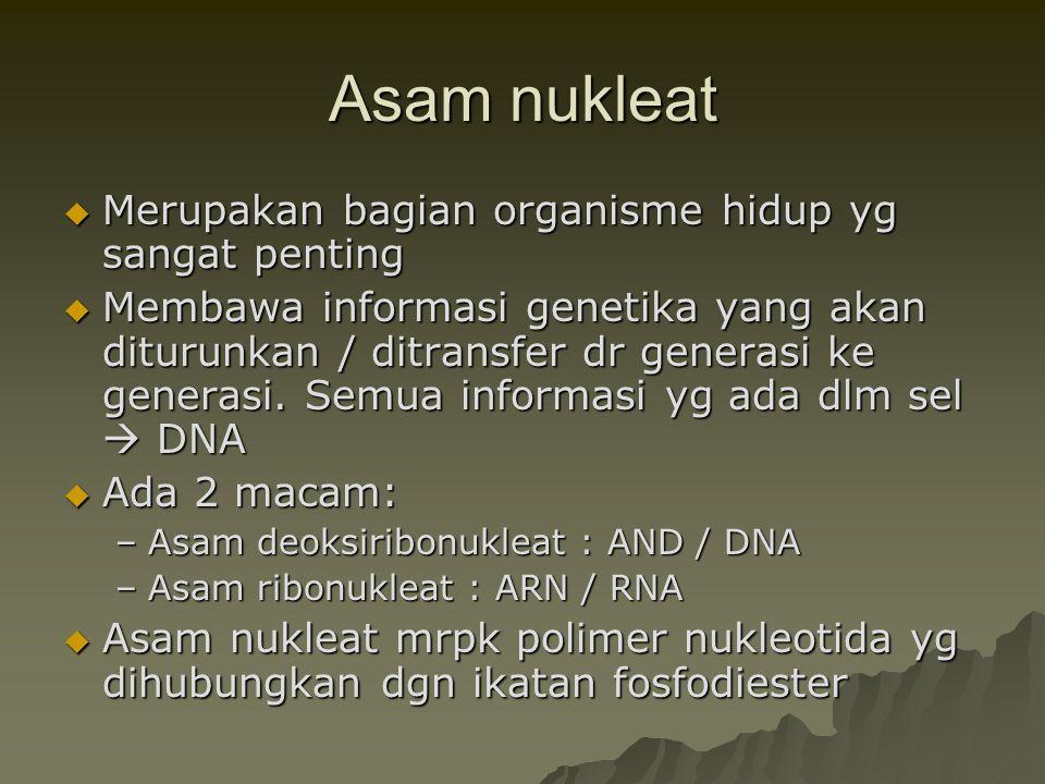 Asam nukleat Merupakan bagian organisme hidup yg sangat penting