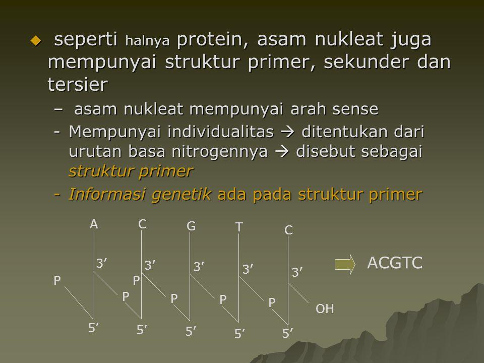 seperti halnya protein, asam nukleat juga mempunyai struktur primer, sekunder dan tersier
