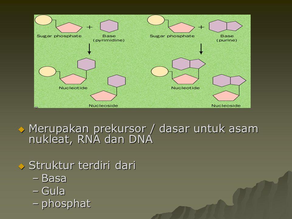 Merupakan prekursor / dasar untuk asam nukleat, RNA dan DNA