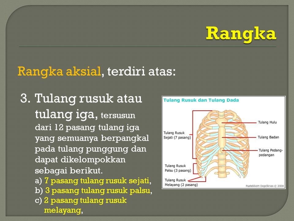 Rangka Rangka aksial, terdiri atas: