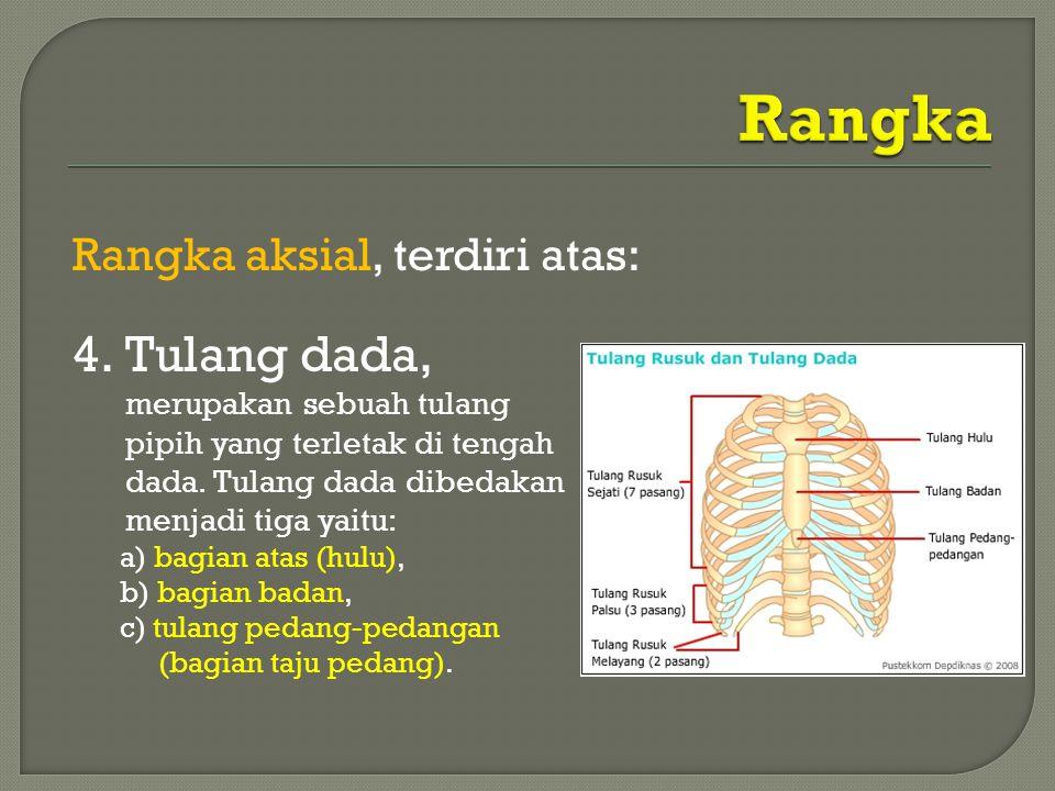Rangka Tulang dada, merupakan sebuah tulang