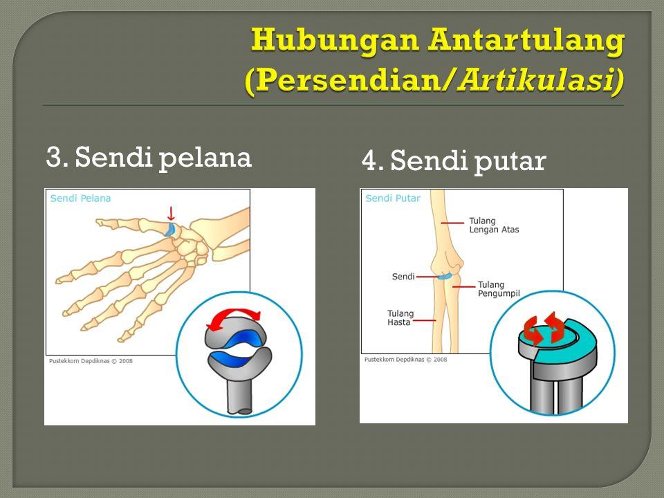 Hubungan Antartulang (Persendian/Artikulasi)