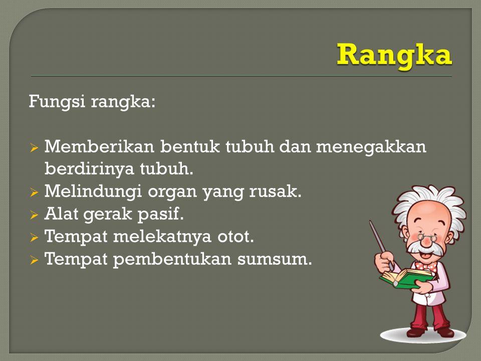 Rangka Fungsi rangka: Memberikan bentuk tubuh dan menegakkan berdirinya tubuh. Melindungi organ yang rusak.