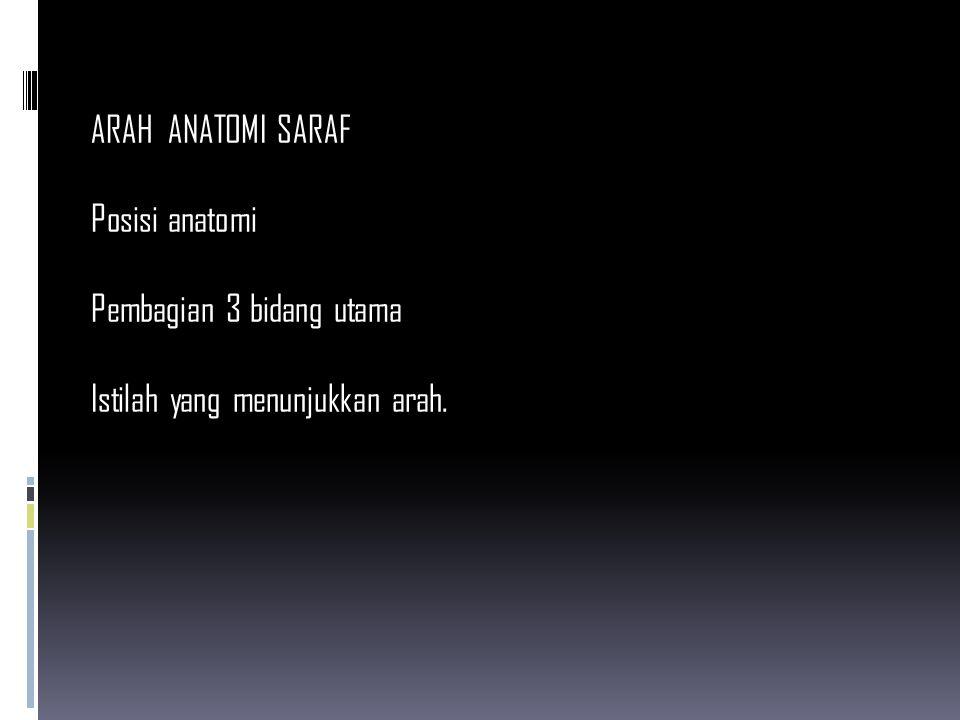 ARAH ANATOMI SARAF Posisi anatomi Pembagian 3 bidang utama Istilah yang menunjukkan arah.