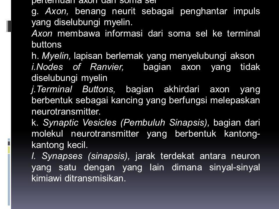 d. Sitoplasma, cairan bening (seperti jelly) pada bagian dalam neuron dan terdiri dari beberapa struktur,