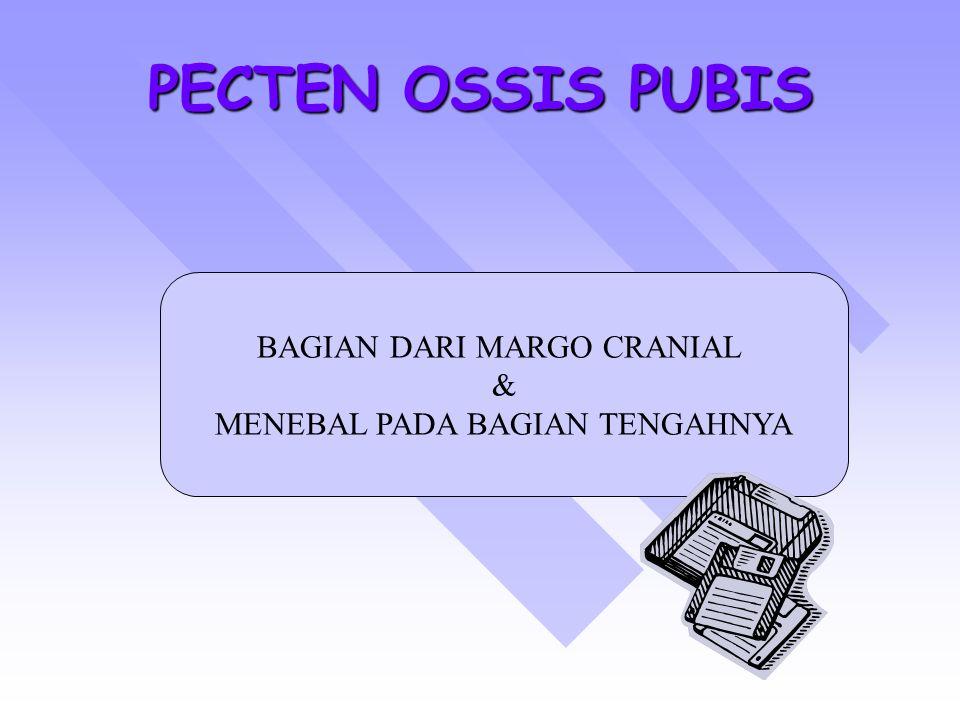 PECTEN OSSIS PUBIS BAGIAN DARI MARGO CRANIAL &