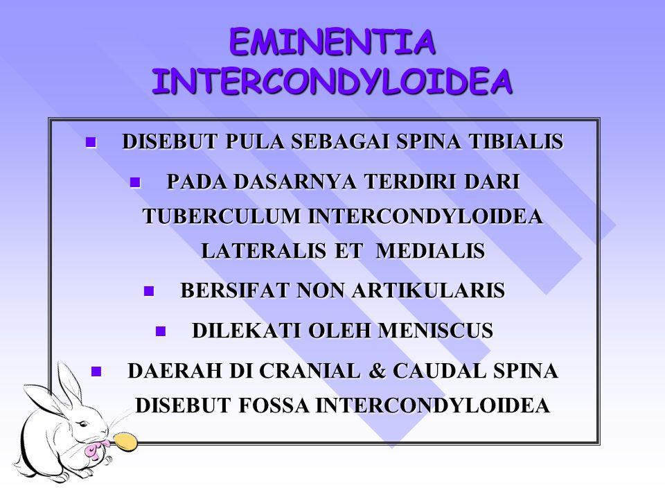 EMINENTIA INTERCONDYLOIDEA