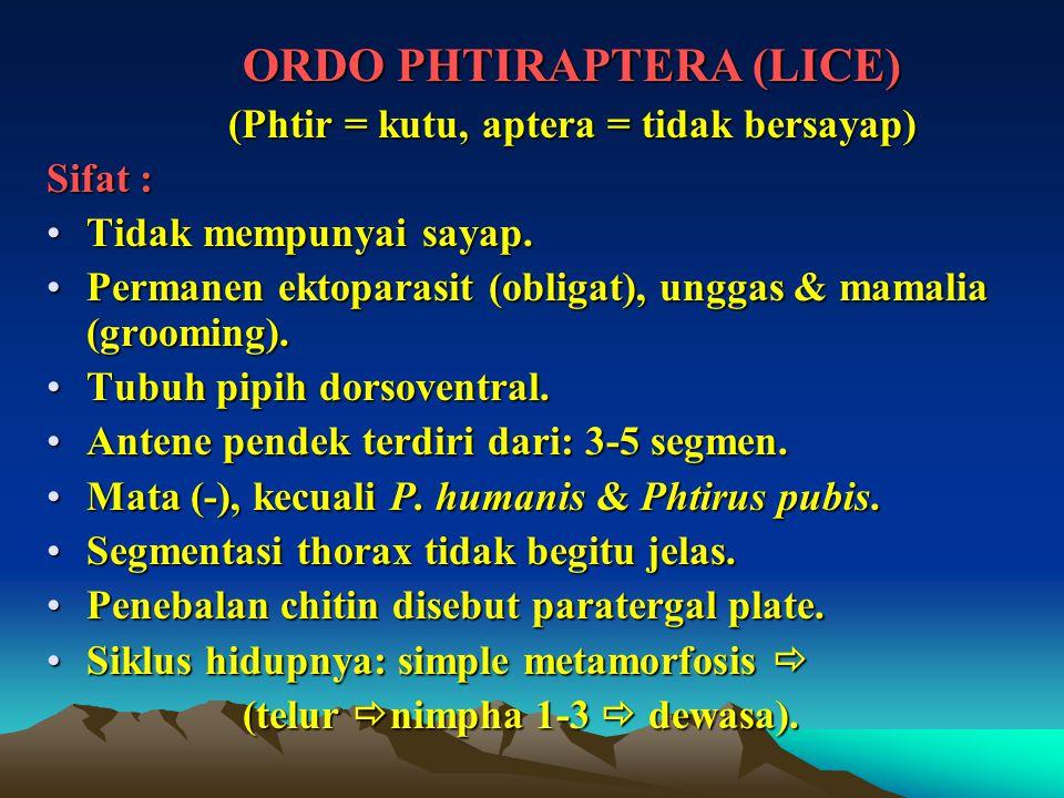 ORDO PHTIRAPTERA (LICE) (Phtir = kutu, aptera = tidak bersayap)