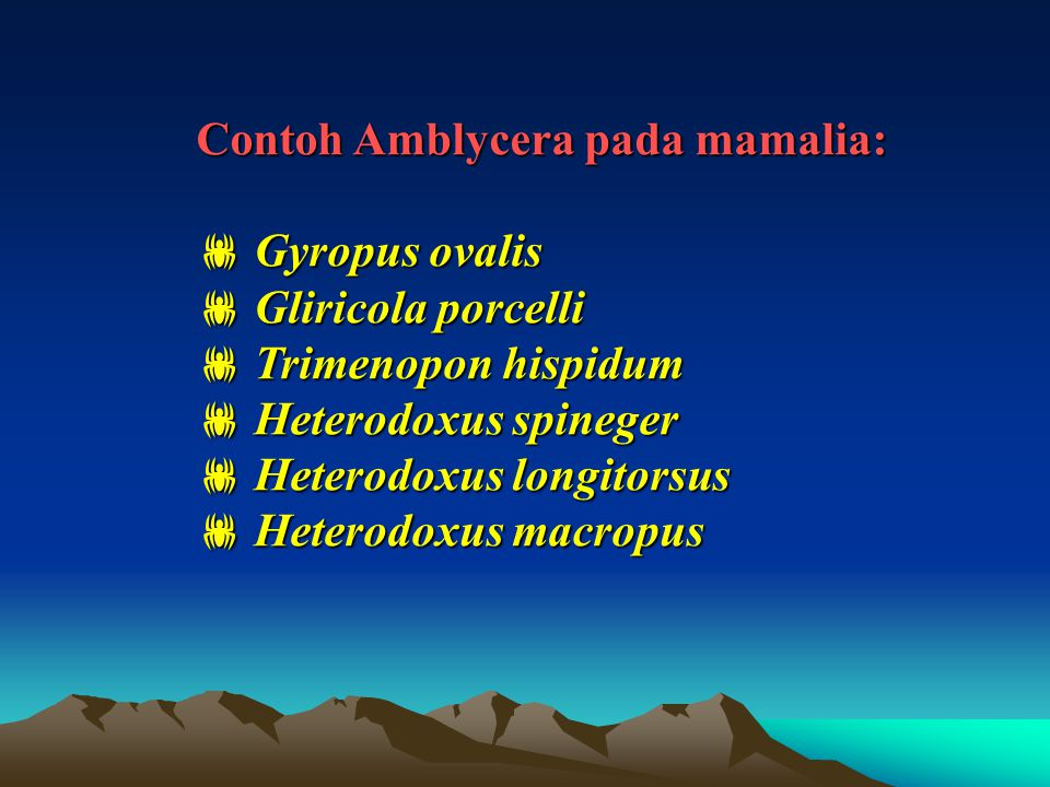 Contoh Amblycera pada mamalia: