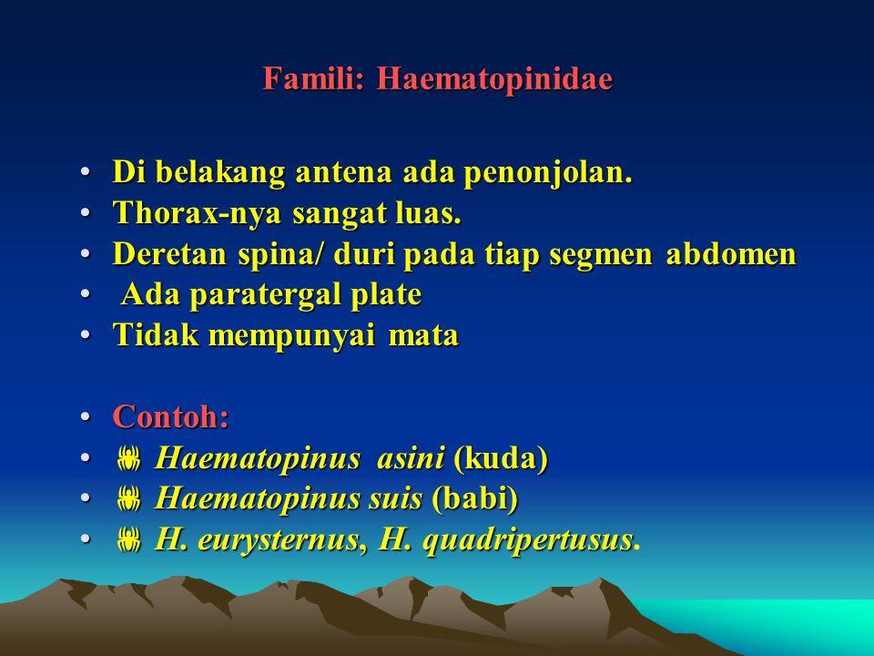 Famili: Haematopinidae