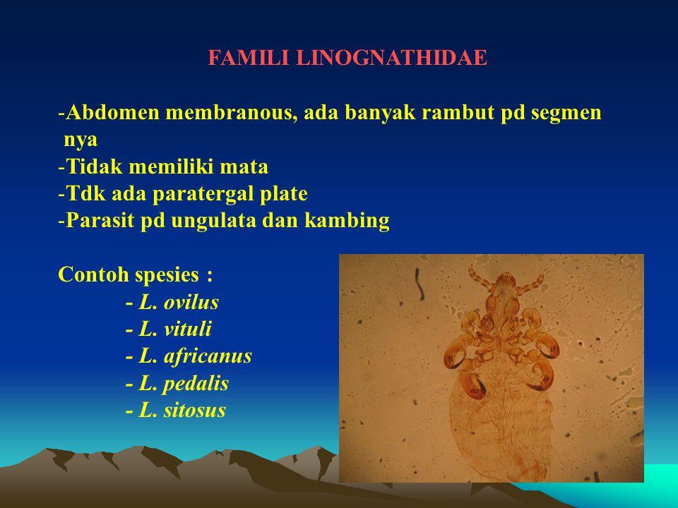 FAMILI LINOGNATHIDAE Abdomen membranous, ada banyak rambut pd segmen. nya. Tidak memiliki mata. Tdk ada paratergal plate.