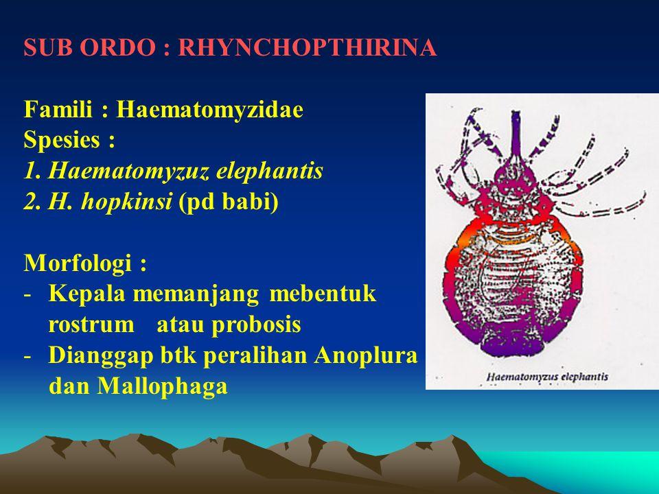 SUB ORDO : RHYNCHOPTHIRINA