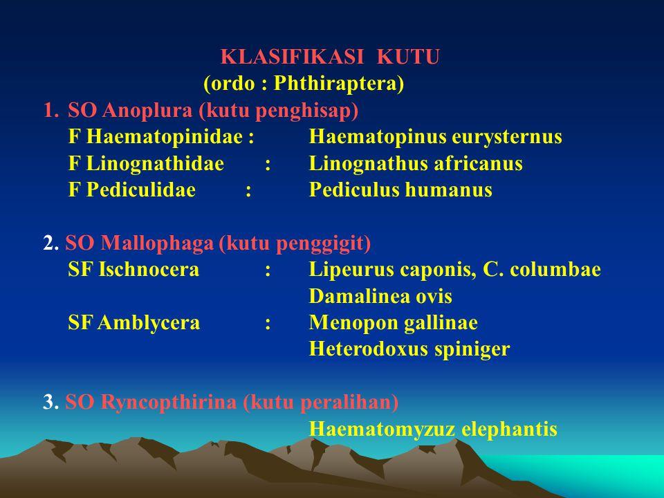 KLASIFIKASI KUTU (ordo : Phthiraptera) SO Anoplura (kutu penghisap) F Haematopinidae : Haematopinus eurysternus.