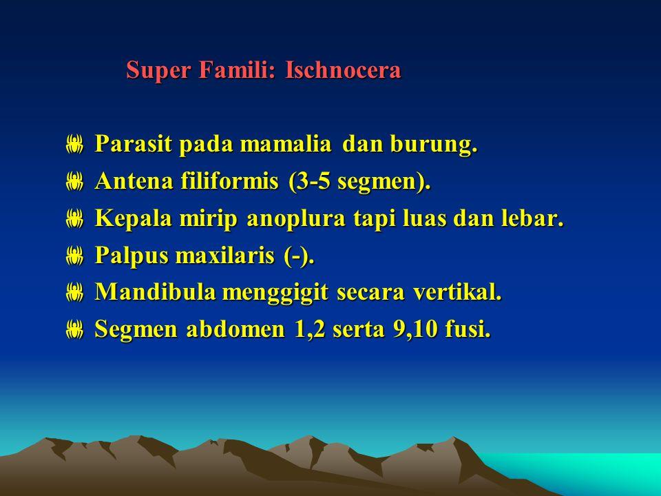 Super Famili: Ischnocera