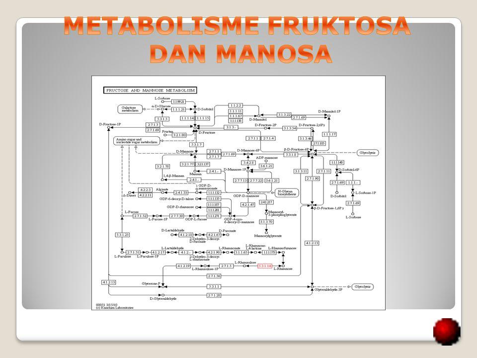 METABOLISME FRUKTOSA DAN MANOSA
