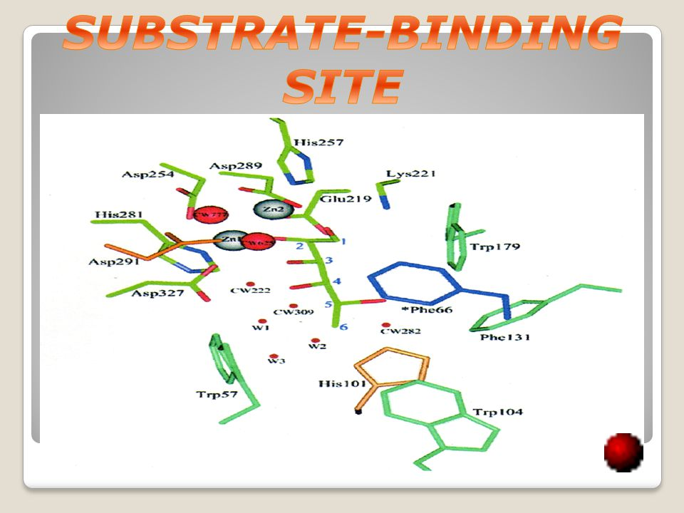 SUBSTRATE-BINDING SITE