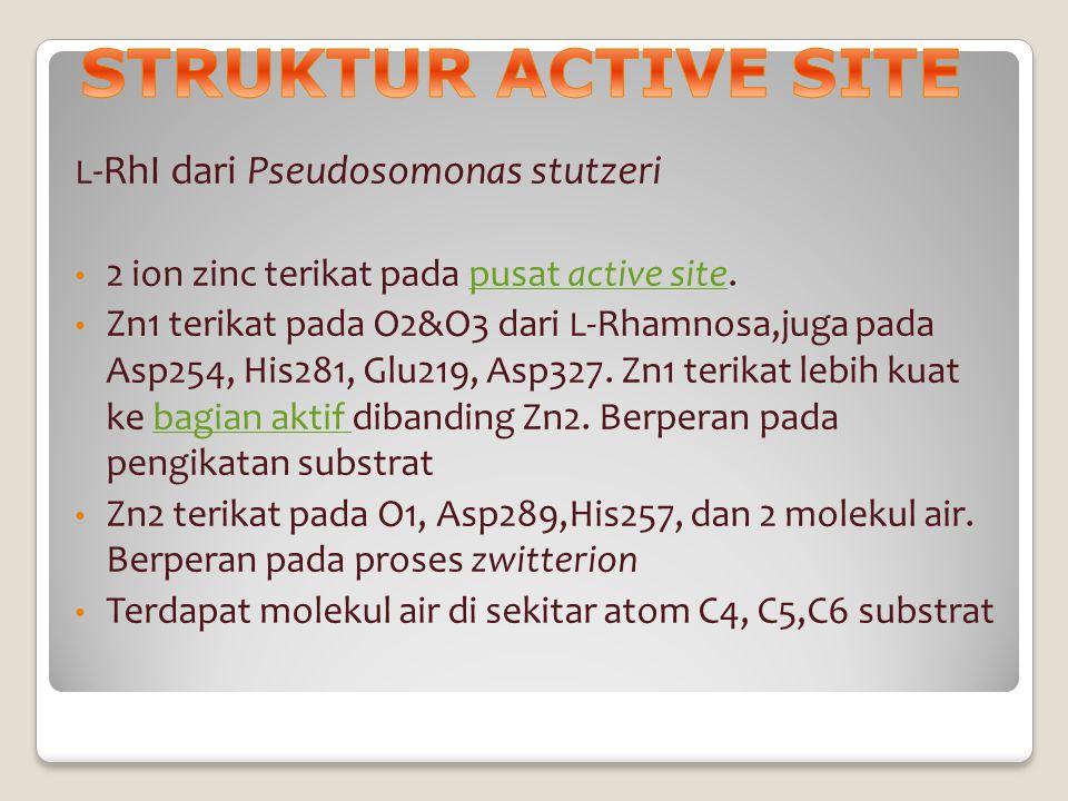 STRUKTUR ACTIVE SITE 2 ion zinc terikat pada pusat active site.