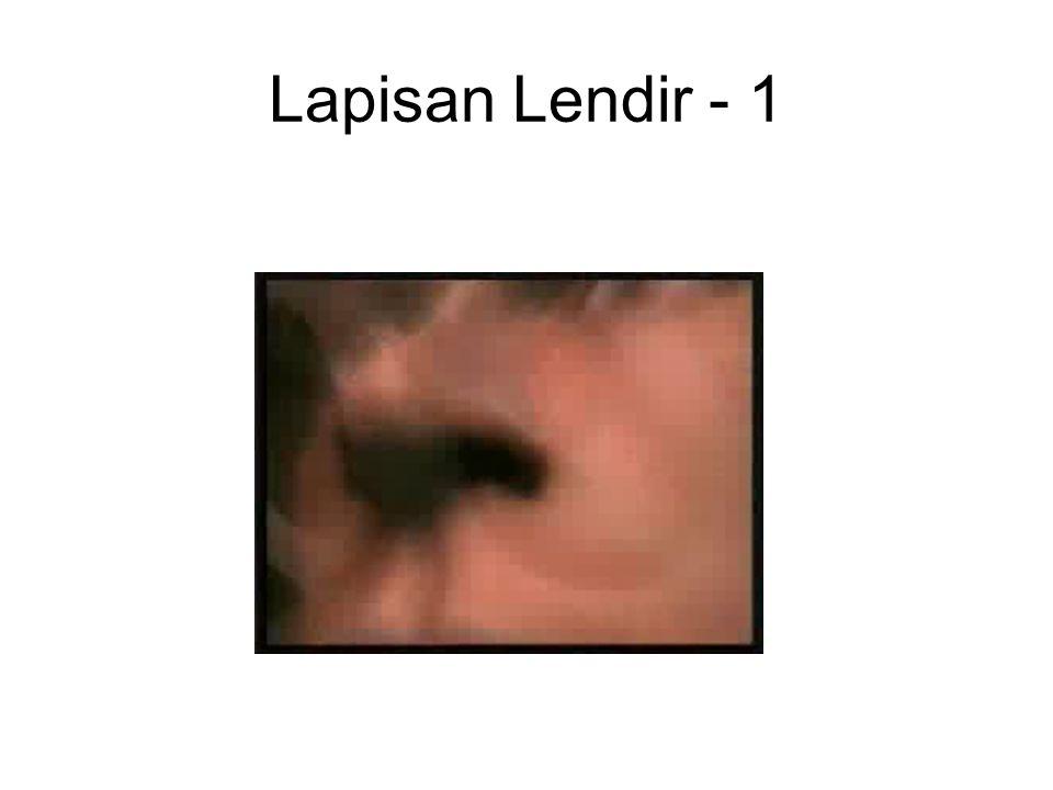 Lapisan Lendir - 1