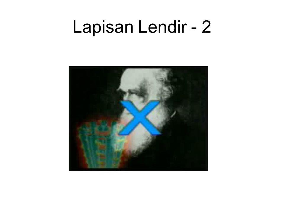 Lapisan Lendir - 2