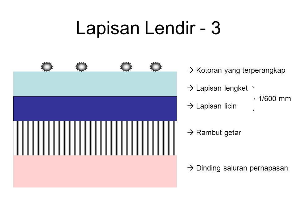 Lapisan Lendir - 3  Kotoran yang terperangkap  Lapisan lengket