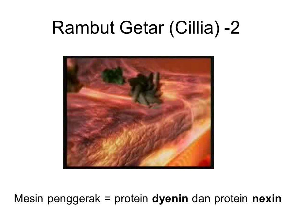 Rambut Getar (Cillia) -2