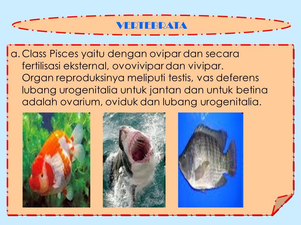 VERTEBRATA Class Pisces yaitu dengan ovipar dan secara. fertilisasi eksternal, ovovivipar dan vivipar.