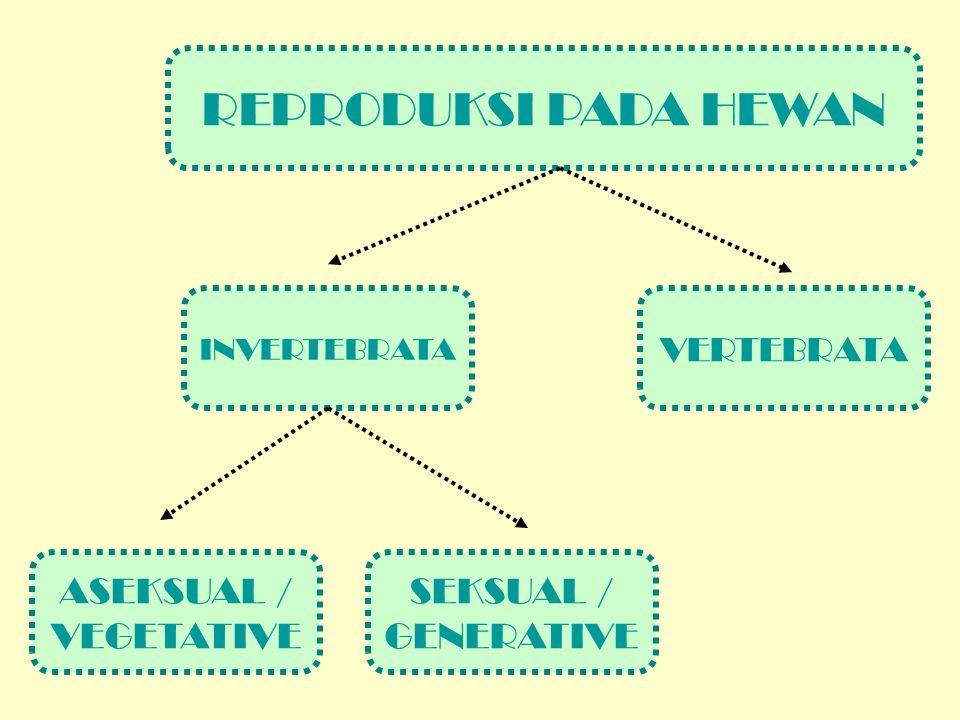 REPRODUKSI PADA HEWAN ASEKSUAL / VEGETATIVE SEKSUAL / GENERATIVE