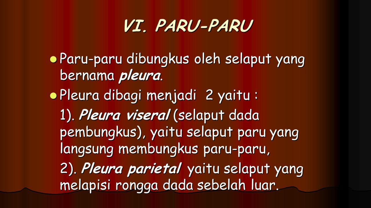 VI. PARU-PARU Paru-paru dibungkus oleh selaput yang bernama pleura.