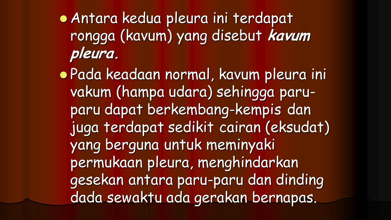 Antara kedua pleura ini terdapat rongga (kavum) yang disebut kavum pleura.