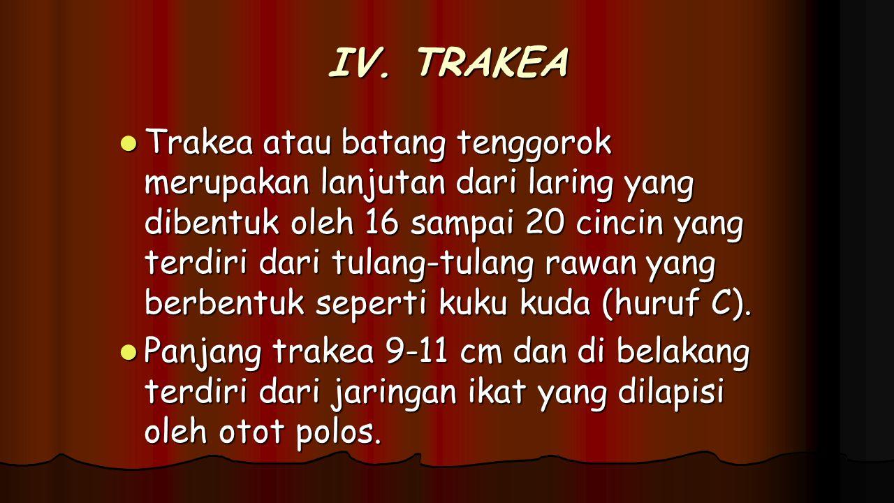 IV. TRAKEA