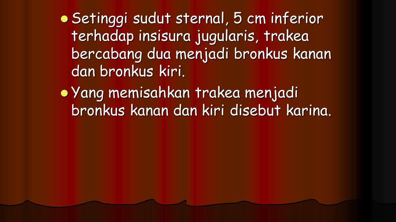 Setinggi sudut sternal, 5 cm inferior terhadap insisura jugularis, trakea bercabang dua menjadi bronkus kanan dan bronkus kiri.
