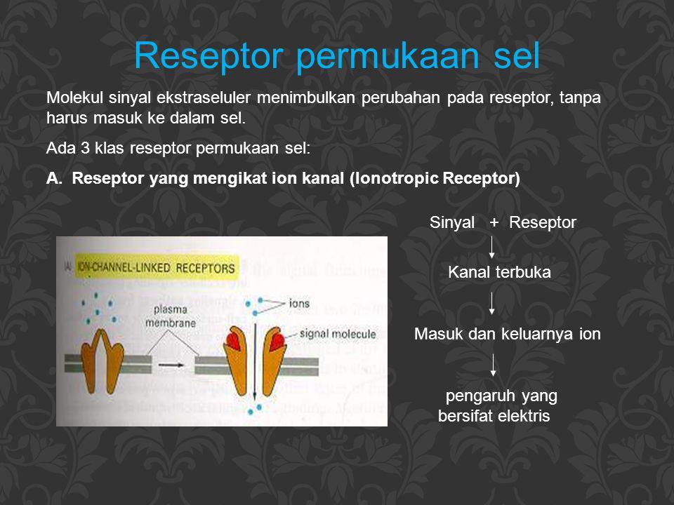 Reseptor permukaan sel